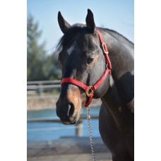 HAMILTON 1 INCH QUALITY HALTER NO SNAP AT THROAT
