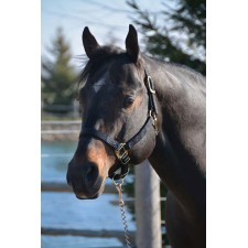 HAMILTON 1 INCH QUALITY HALTER WITH ADJUSTABLE CHIN AND SNAP AT THROAT