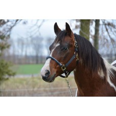COUNTRY LEGEND COMBO HALTER WITH ROPE NOSEBAND