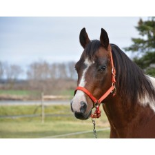 COUNTRY LEGEND SOFT-TOUCH HALTER