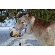 HAMILTON MINIATURE HORSE HALTER